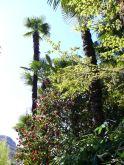 induljon a botanikus kert-túra!