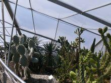 agávék, kaktuszok és egyéb pozsgások, melyek fagymentes védelem alatt telelnek át