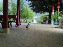 érkeznek az első vendégek :)